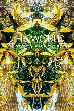 :THE WORLD ‐ 「symmetry」#Autumn leaves